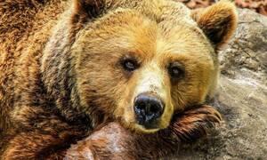 Τρόμος για οδηγό: Αρκούδα πλησίασε το αυτοκίνητό του – «Πάγωσε» με αυτό που την είδε να κάνει (pics)