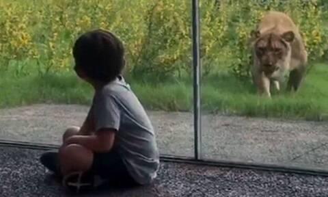 Λυσσασμένο λιοντάρι ορμάει σε ανυποψίαστα παιδάκια!