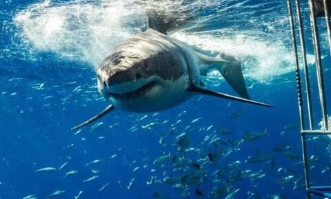 Τεράστιος καρχαρίας την «πέφτει» σε δύτες!