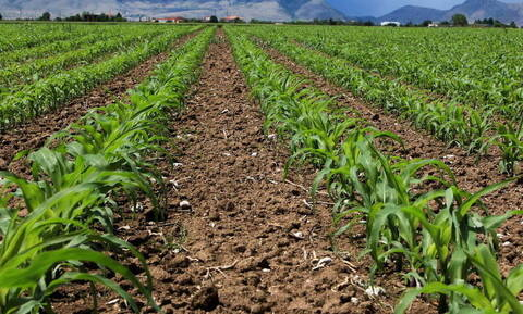 Επιδοτήσεις αγροτών 2019: Η κυβέρνηση δίνει 235 εκατ. ευρώ - Ποιοι είναι οι δικαιούχοι