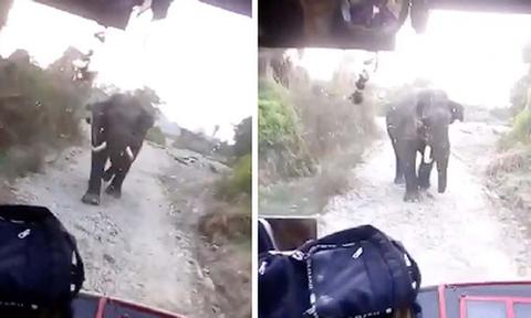 Οδηγός λεωφορείου βλέπει μπροστά του εξαγριωμένο ελέφαντα! Δεν φαντάζεστε τι ακολουθεί... (video)