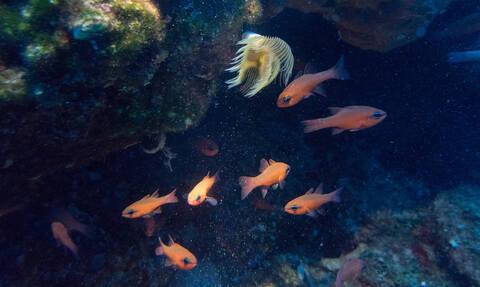 Απίστευτη ψαριά στην Κρήτη: Έπιασαν αυτό το «τέρας» (pic)