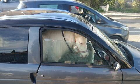Τη σταμάτησαν γιατί είχε άλογο στο αμάξι της - Γι' αυτό δεν της έκοψαν κλήση! (pics)