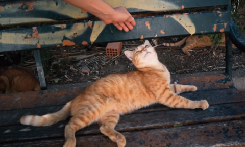 Βίντεο: Αυτή η γάτα είναι η πιο… Ελληνίδα από όλες!