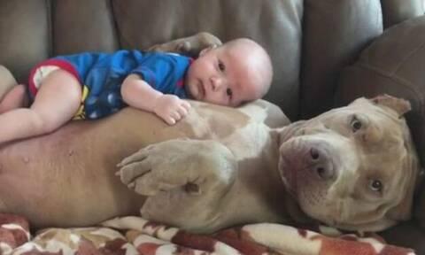 Βίντεο: Έρωτας! Πιτ-μπουλ κάνει τρομερές αγκαλιές με μωράκι!