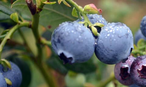 Ξέρεις τι φρούτο είναι αυτό; Σου έχουμε έναν πολύ καλό λόγο να το δοκιμάσεις!