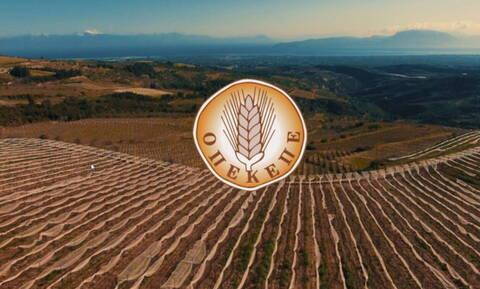 ΟΠΕΚΕΠΕ: Έρχεται μεγάλη πληρωμή 120 εκατ. ευρώ στους αγρότες