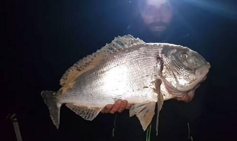 Ψαράς βλέπει το καλάμι του να λυγίζει. Λίγο αργότερα άρχισε να ουρλιάζει απ' τη χαρά του... (video)