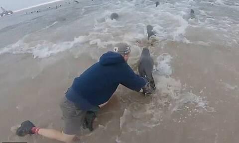 Ψαράς είδε στη στεριά μια φώκια - Δεν θα πιστεύετε τον λόγο που έτρεξε να την πιάσει (pics+vid)