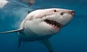 На Кипр приплыли акулы