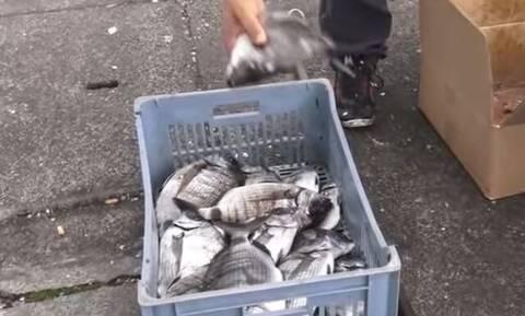 Ψάρεμα: Ρίχνουν τα καλάμια τους και πιάνουν ψάρια και δεν μπορούν να τα σηκώσουν... (video)