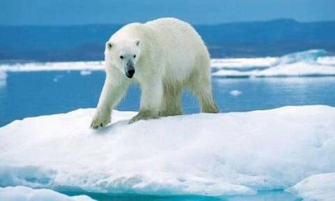 Ρωσία: Εκκενώνουν χωριό που έχει κατακλυστεί από πολικές αρκούδες