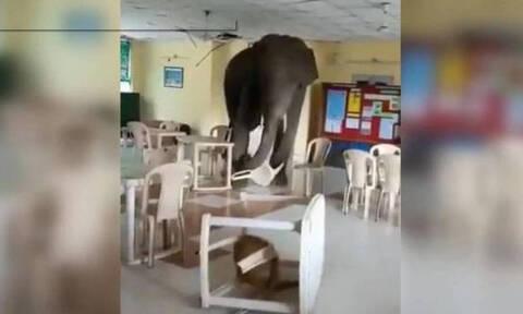 Ελέφαντας μπαίνει σε στρατιωτική καντίνα και τον κυνηγούν με φλεγόμενο πυρσό (vid)