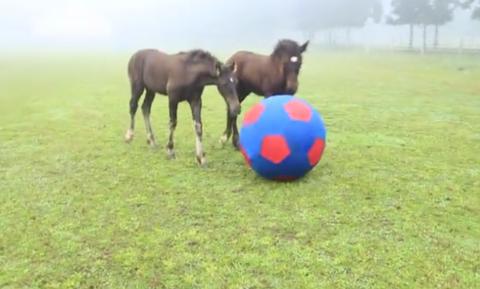 Βίντεο: Αυτά δεν είναι άλογα, είναι επαγγελματίες ποδοσφαιριστές!
