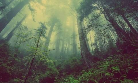 Κάμερες κατέγραψαν απόκοσμο πλάσμα σε δάσος – Δείτε τι είδαν οι επιστήμονες (pics)