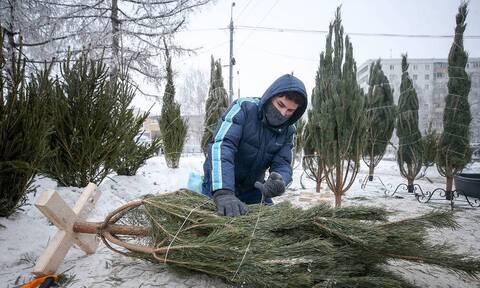 Эксперты подсчитали расходы россиян на елки и новогодний декор