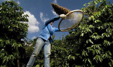 Προετοιμάσου: σύντομα ο καφές θα τελειώσει στον πλανήτη