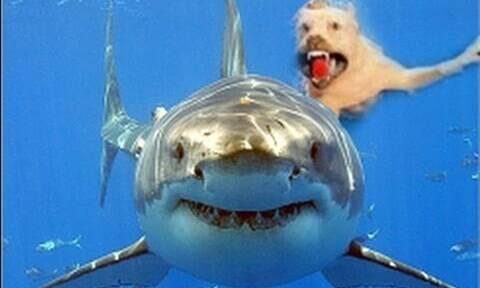 Βίντεο: Έχετε ξαναδεί σκυλί να δαγκώνει καρχαρία;