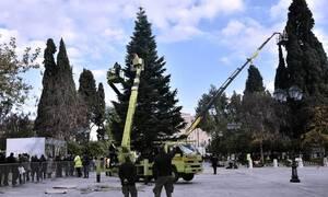 Ήρθαν τα Χριστούγεννα στην Αθήνα: Οι πρώτες εικόνες από το δέντρο στο Σύνταγμα