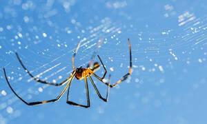 Μήπως είδες στο όνειρό σου αράχνη;