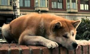 Αίγιο: Αυτή είναι η σκυλίτσα-Χάτσικο που περιμένει το αφεντικό της (pics)