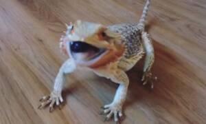 Βίντεο: Πετάνε μούρα σε αυτόν το δράκο και κάνει σαν… παλαβός!