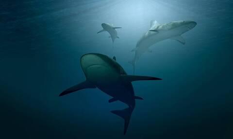 Γιγάντιος λευκός καρχαρίας επιτίθεται σε δύτες – Η συνέχεια σοκάρει (pics)