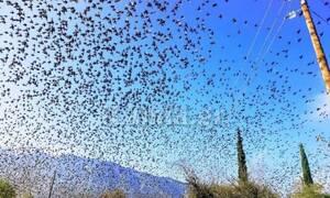 Φθιώτιδα: Εντυπωσιακό θέαμα - Εκατοντάδες ψαρόνια σε μοναδικούς σχηματισμούς (pics)
