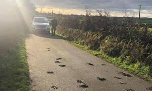 Μυστήριο: Εκατοντάδες πτηνά βρέθηκαν νεκρά στο δρόμο