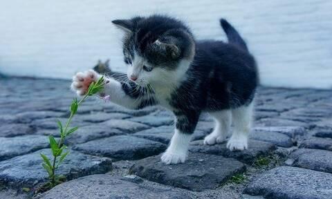 Δεν θα σου μείνει αμυγδαλή! Δες τι έκανε ένα γατάκι σε ορεινό χωριό της Εύβοιας!