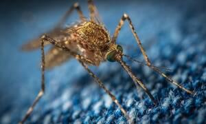 Εταιρεία προσέλαβε άνδρα για να διώχνει κουνούπια – Δεν διανοείστε με ποιον τρόπο (pic)