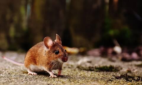 Η φωτογραφία της χρονιάς: Δύο ποντίκια παίζουν μπουνιές (photo)