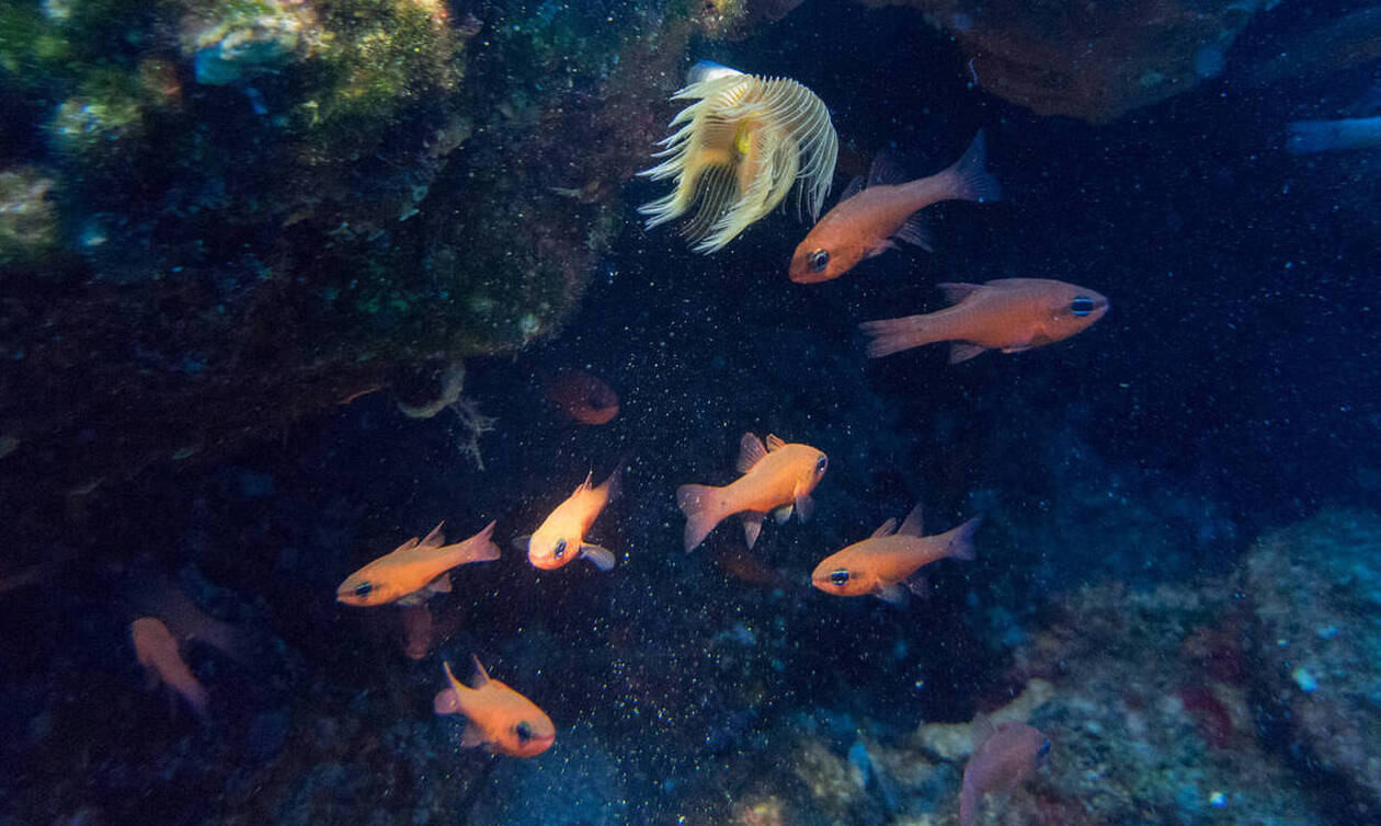Τρόμος για Έλληνα ψαρά: Τράβηξε τα δίχτυα και... «πάγωσε»! Δείτε τι τέρας ψάρεψε