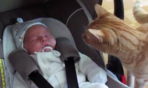 Γάτες VS Νεογέννητα - Δείτε το ξεκαρδιστικό βίντεο (vid)