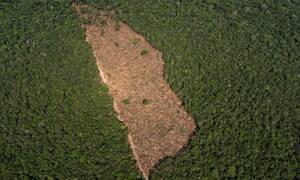Βραζιλία: Εκτινάχθηκε η αποψίλωση του Αμαζονίου