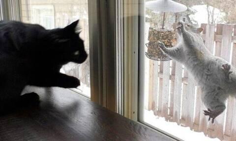 Δείτε τι κάνει ο… νταής σκίουρος στη γάτα! (vid)