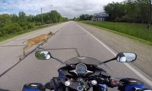 Αγχωτικό βίντεο: Μοτοσικλετιστής πέφτει πάνω σε ελάφι! (vid)