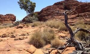 Καιρός: Καύσωνας προ των πυλών στην Αυστραλία - Θερμοκρασία ρεκόρ 51 βαθμούς Κελσίου (pic)