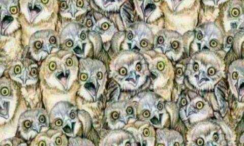 ΤΕΣΤ: Μπορείτε να βρείτε το γατάκι ανάμεσα στις κουκουβάγιες;