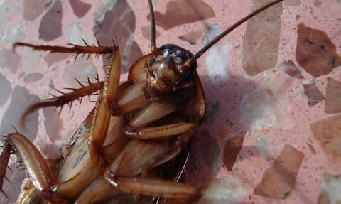 Προσοχή! Αν δείτε αυτή την κατσαρίδα, τρέξτε αμέσως μακριά