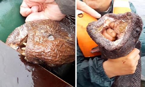 Ψαράδες πιάνουν τα ψάρια που δεν ήθελαν να δουν ποτέ και παθαίνουν το σοκ της ζωής τους... (video)