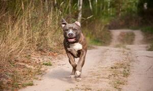Φρίκη: Έπαθε κρίση επιληψίας και την κατασπάραξε ο σκύλος της