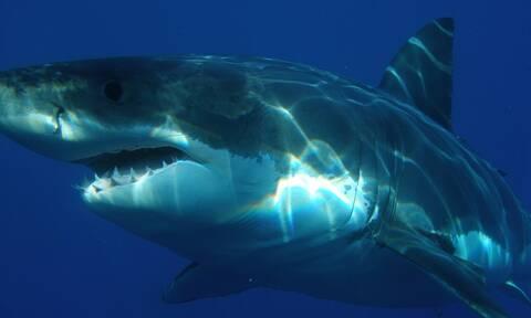 Συγκλονιστικό βίντεο: Καρχαρίας του κατασπάραξε το πόδι - Πώς τον έσωσαν την τελευταία στιγμή