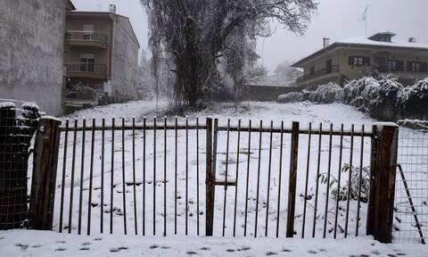 Ζηνοβία: Αρκτική εισβολή από την Παρασκευή - Πού θα χτυπήσει η κακοκαιρία