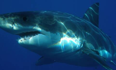 Τρόμος για ψαροντουφεκά: Παγιδεύτηκε στα δόντια καρχαρία και σώθηκε από θαύμα