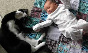 Ναζιάρα γάτα βγάζει…. λατρεία σε μωράκι! (vid)