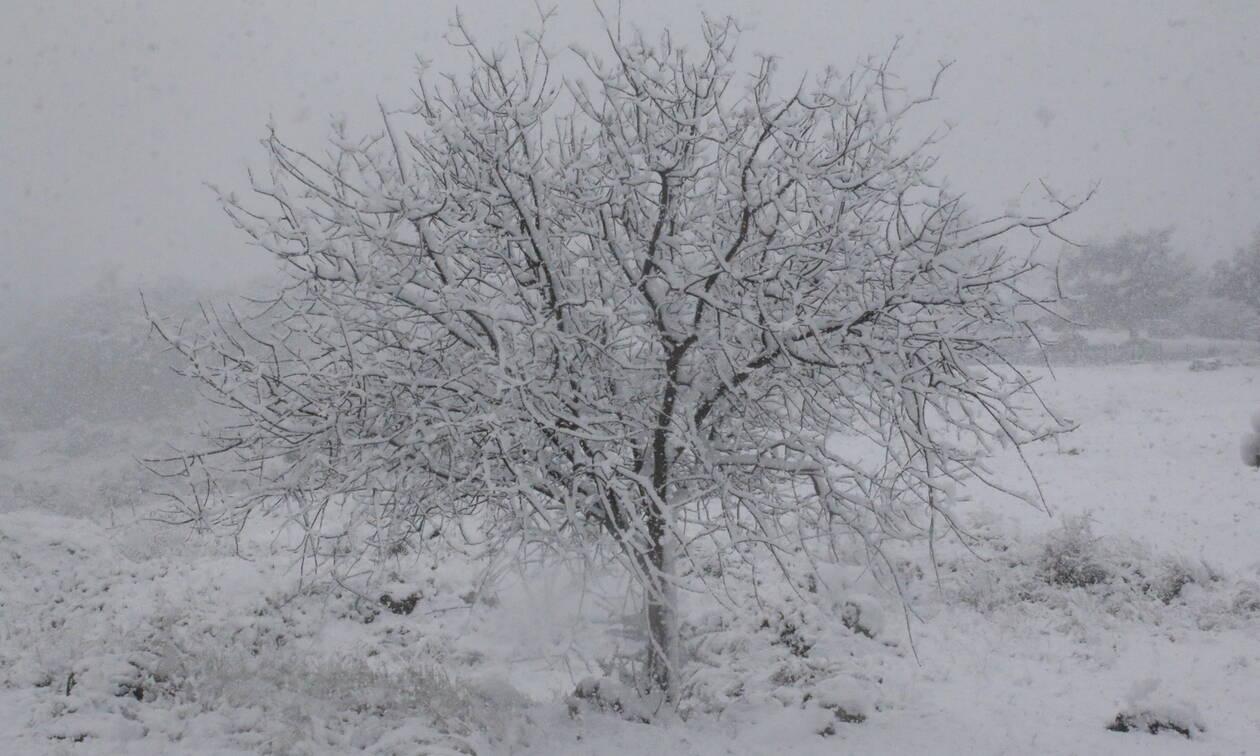 Έκτακτο δελτίο επιδείνωσης του καιρού: Η «Ζηνοβία» φέρνει χιόνια, θυελλώδεις ανέμους και πολύ κρύο