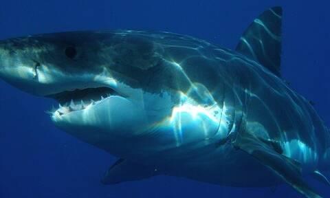 Τα οστά ενός άνδρα βρέθηκαν στο στομάχι ενός καρχαρία