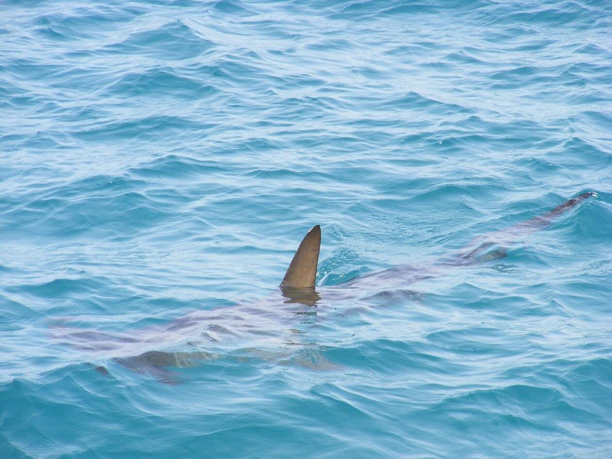 shark-fin-472685_1280.jpg
