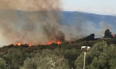 Φωτιά ΤΩΡΑ στην Κεφαλονιά - Συναγερμός στην Πυροσβεστική